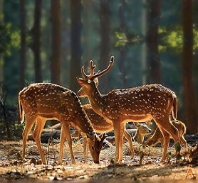 Forests & Wildlife